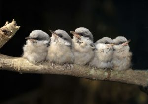Alabama Wildlife Center's Baby Bird Season