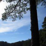 Southeastern Outings Dayhike in Oak Mountain State Park