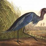 Exploring Natural Alabama presents Bald Eagles: Turtles Are on the Menu