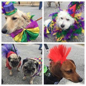 Pawdi Gras Pet Parade
