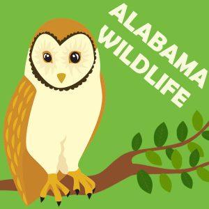 Alabama Wildlife Animal Show