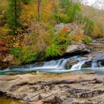 Homeschool Hangout: Turkey Creek Nature Preserve