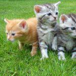 Kitten Craft Club: Kitty Headbands