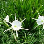 Southeastern Outings Cahaba Lily Walk, Hargrove Shoals along the Cahaba River in Bibb County