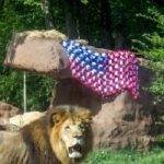 4th of July at the Zoo