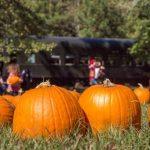 Pumpkin Patch Express