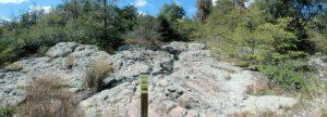 Gosse Nature Walk #15: Moss Rock Preserve