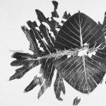 Botanical Monoprint Workshop with Celeste Pfau