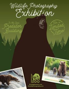 Wildlife Photography Exhibition : Lindsay Donald