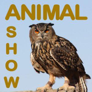 Wild Week: Animal Show
