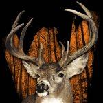 World Deer Expo