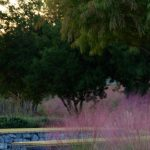 Gosse Nature Walk #20: Railroad Park