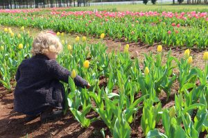 3rd Annual American Village Festival of Tulips