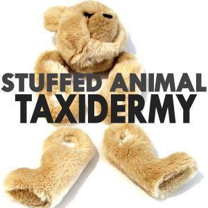 Stuffed Animal Taxidermy