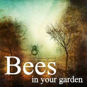 The Importance of Bees in Your Garden