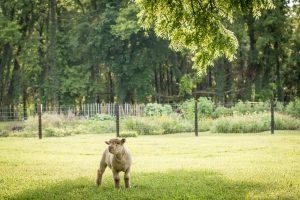 1818 Farms Open Farm Day