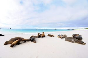 Exploring Natural Alabama presents Galapagos: A Virtual Tour of a Natural Wonder