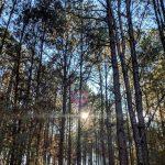 Guided Hike: Coalburg Property