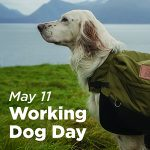 Working Dog Day