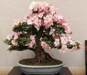 Alabama Bonsai Spring Show