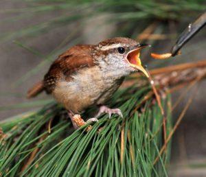 Alabama Wildlife Center Baby Bird Shower