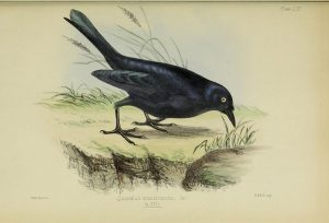 Philip Henry Gosse: A Naturalist's Sojourn in Alabama