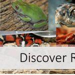 Discover Reptiles