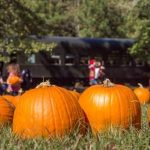 Pumpkin Patch Express