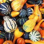 Little Seeds: Pumpkin Gardens