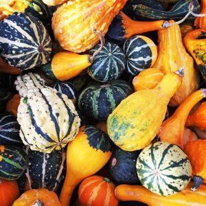 Little Seeds: Pumpkin Gardens