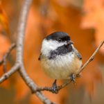 Family Bird-watching in the Gardens: Winter Birds and Bird-Feeding Tips
