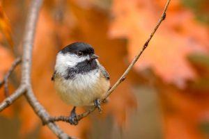 Family Bird-watching in the Gardens: Winter Birds ...