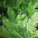 Saturdays in the Gardens: Grow Ferns that Flourish