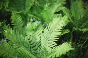 Saturdays in the Gardens: Grow Ferns that Flourish