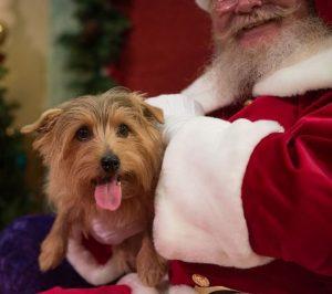 Claus and Paws - Pet Photos with Singing Santa
