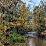 Guided Hike: Turkey Creek Restoration Site