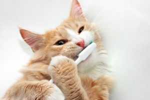 Brush Up On Your Pet Dental Knowledge With Pet Sup...