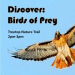 Discover Birds of Prey