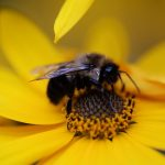 Bees, Plants, and Honey: Pollination Ecology