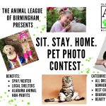 The Animal League Of Birmingham's Sit.Stay. Home., Quarantine Cutie, Pet Photo Contest