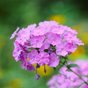 Webinar: Introduction to the Study of Native Plants