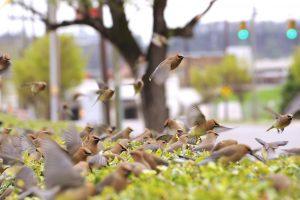 ONLINE Course: Audubon at Home: Bird Migration