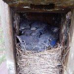 Nesting Bird Behaviors