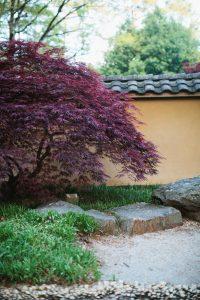 Japanese Maple Day