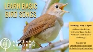 Learn Basic Bird Songs