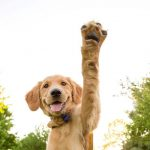 DogFest Alabama