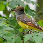 Alabama Audubon Field Trip: Russ Bailey Memorial Beginner Bird Outing