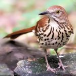Audubon at Home: Introduction to Birds and Birding