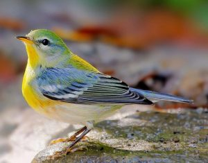 Alabama Audubon Field Trip: Cahaba River Park