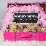 The Roverchase Foundation Service Dog Graduation Gala 2021